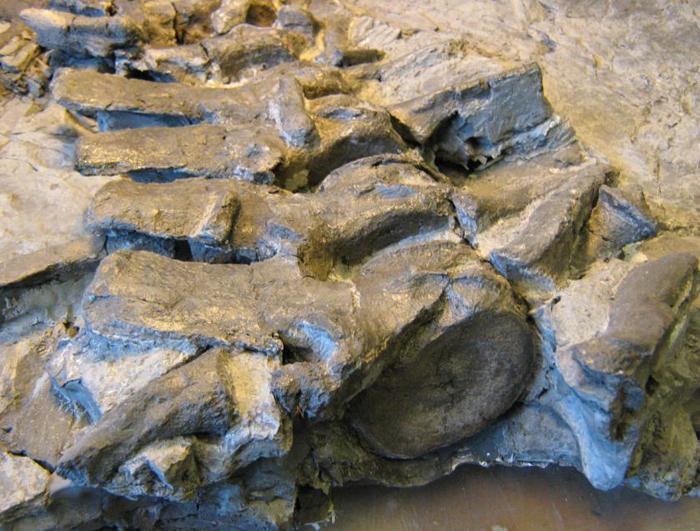 Germany plesiosaur Kreis Hoxter