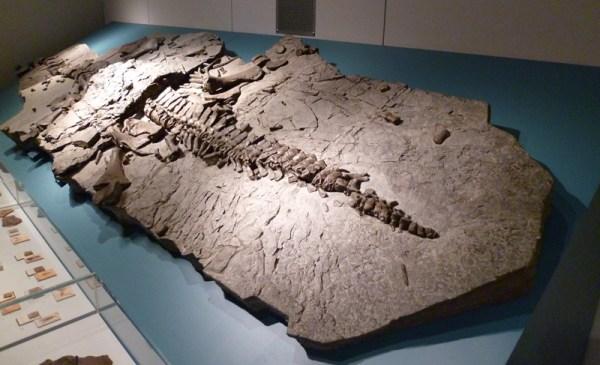 Kreis Hoxter plesiosaur