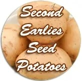 "<span class=""light"">Second</span> earlies seed potatoes"