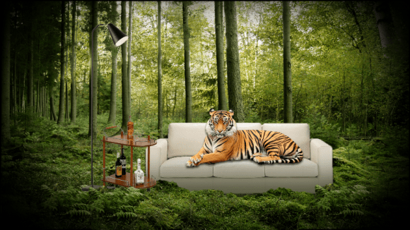 tiger in forest_small