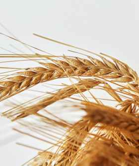 The Truth About Whole Grains PLR