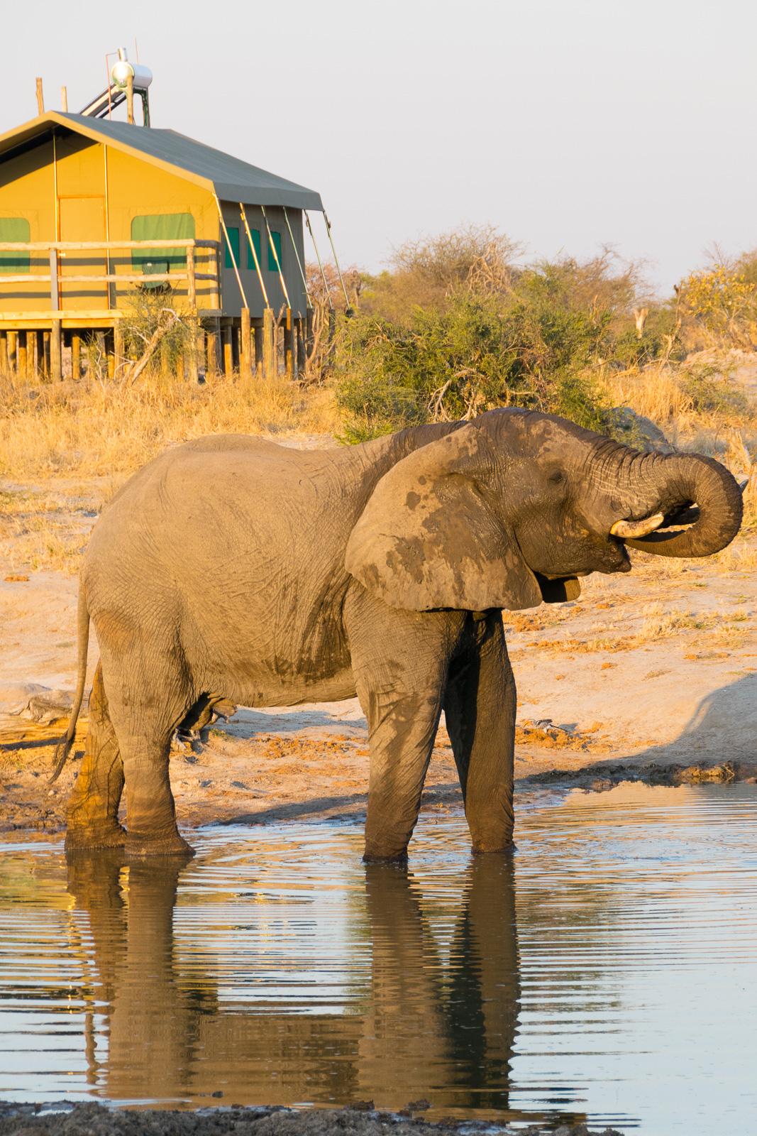 elephant_sands