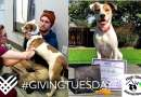 Support High Sierra Animal Rescue on Giving Tuesday