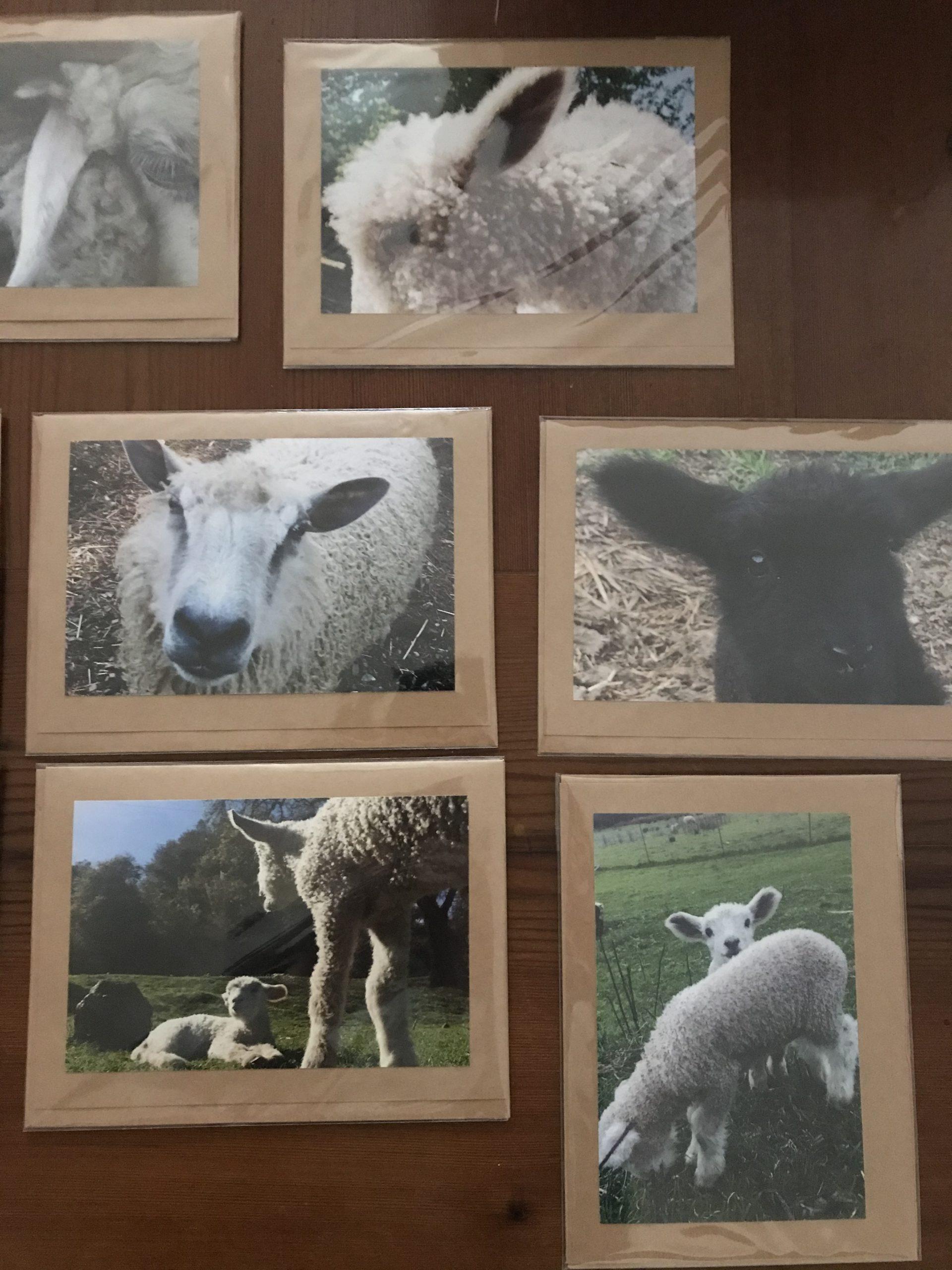 Farm Greeting Cards Plum Blossom Farm