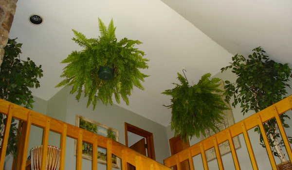 9 Plantes d\'intérieur qui nettoient l\'air et qui sont quasi ...