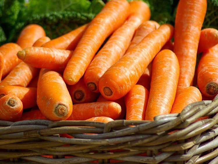 carottes1