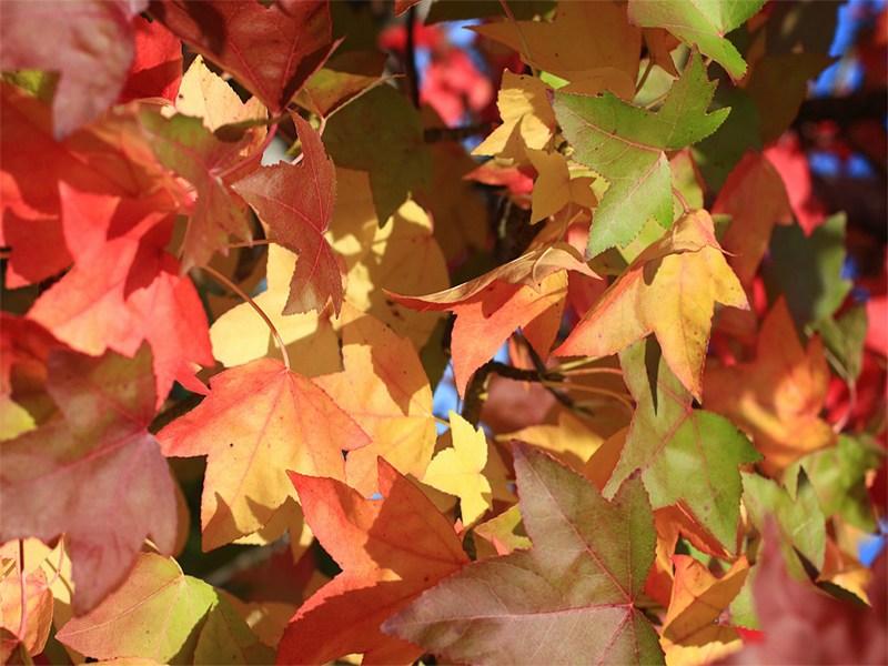 feuilles-arbres-automne