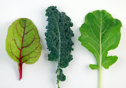 feuilles-vertes-foncees
