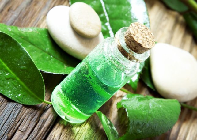 Essential Oil Bottle.Tea Tree Essence for Aromatherapy