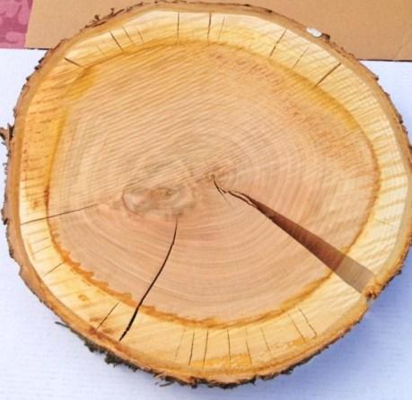 Baumscheibe trocken lassen - Bild: www.PlusPerfekt.de