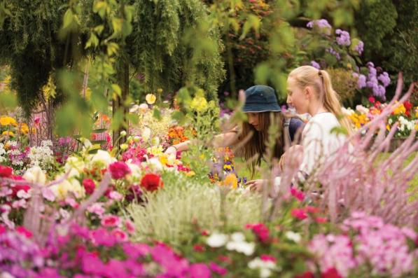 Blumenmeer zum Carnival of Flowers in Toowoomba in Australien I Tourism and Events Queensland (TEQ)