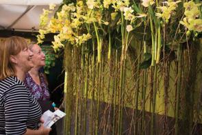 Ikebana Ausstellung im Rahmen des Carnival of Flowers I Credits: Tourism and Events Queensland (TEQ)