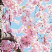 Spring Style Party: Kreiere neue Looks aus deinem Kleiderschrank
