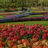 """Keukenhof: """"Wir bringen die Tulpen zu Ihnen nach Hause!"""""""