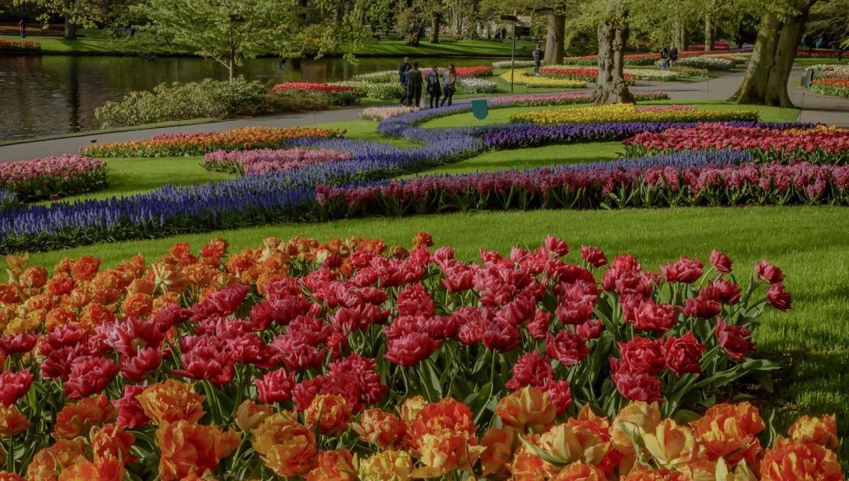 Tulpenblüte im Keukenhof in Holland