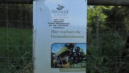 Aronia-Beeren