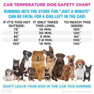 Can You Leave Dog Food In A Hot Car