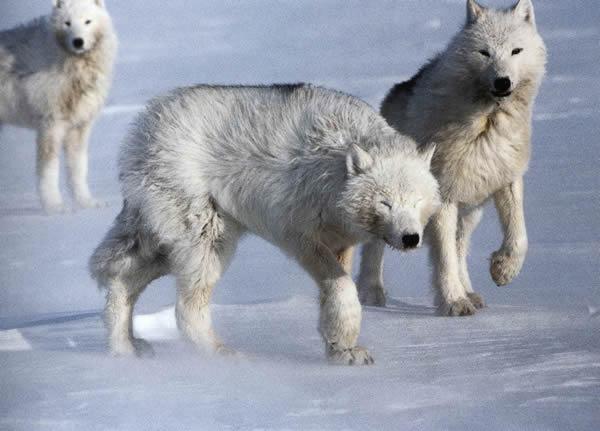 https://i2.wp.com/www.pmel.noaa.gov/arctic-zone/images/Wolf/mech_05.jpg?w=616&ssl=1