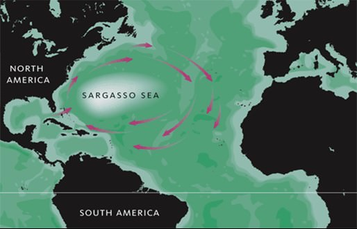 Sargasso Sea-gyre