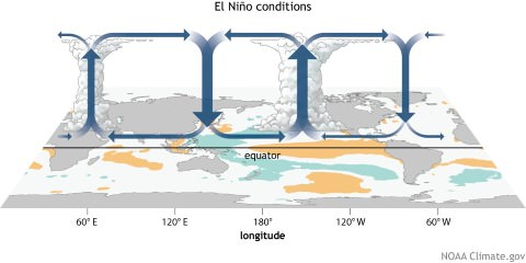 walker cell during el nino conditions