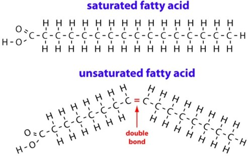 Saturated Fatty Acids Are Solid At Room Temperature Because