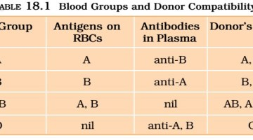 Blood | Blood Groups | Formed Elements