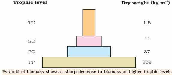 Ecological Pyramids Pyramid of numbers biomass energy – Ecological Pyramid Worksheet