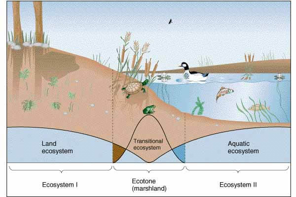 Ecotone: Edge Effect, Edge Species and Ecological Niche | PMF IAS