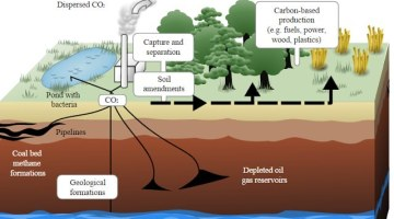 Greenhouse Effect & Global Warming | Carbon Sink