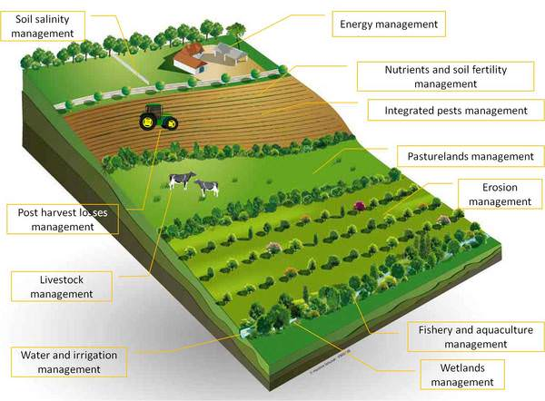 Increased Demand For Sustainable Food Production