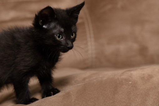 Real-Life Horror: Fostering Kittens