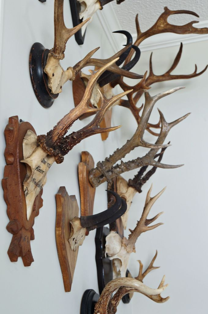 collection of antlers