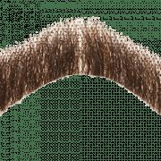 Moustache PNG Transparent Images PNG All