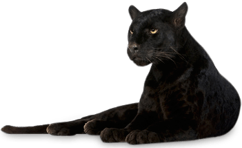 panther png transparent images png all