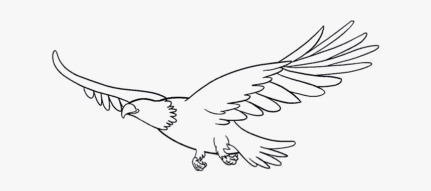 Antarctica Drawing Bird Draw A Flying Eagle Hd Png Download Transparent Png Image Pngitem