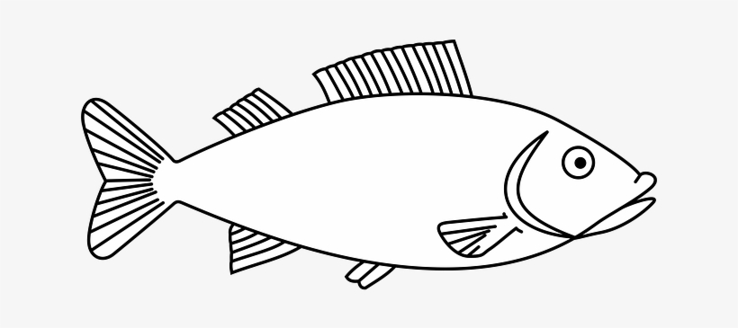 Easy Long Fish Drawings Fish Outline Free Transparent Png Download Pngkey