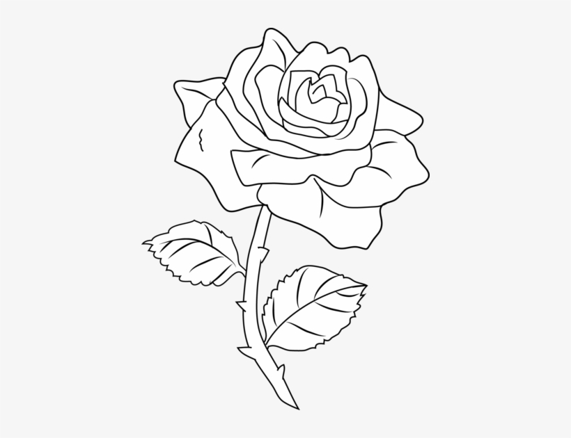 Pretty Rose Coloring Page Roses Outlines 414x550 Png Download Pngkit