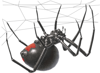 Image result for black widow spider png