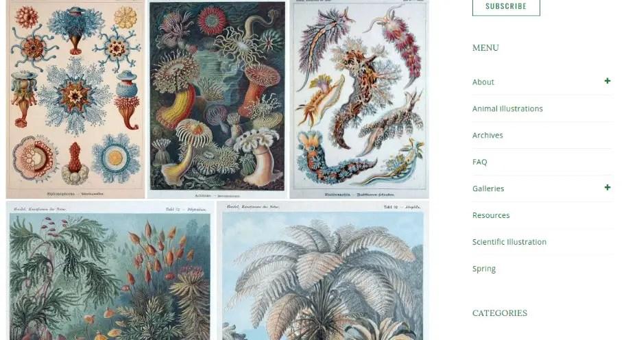 Free Vintage illustrations