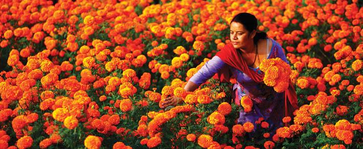 नेपाल फूलमा परनिर्भर