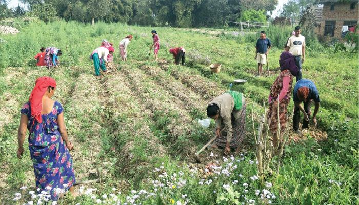 किसानलाई वर्गीकरण गरी पहिचान गर्ने –कृषि मन्त्री खनाल