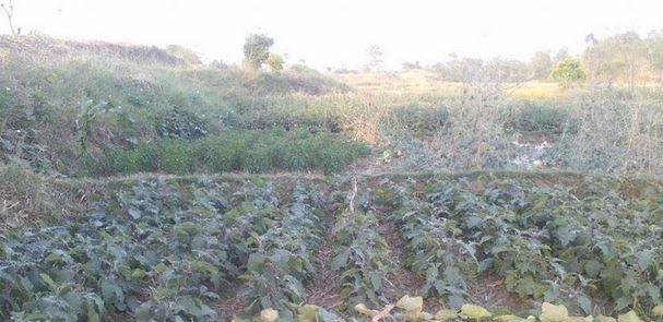 तरकारी बाली सुकेपछि किसान चिन्तित