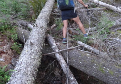 Bushwhacks are Part of the PNT Adventure