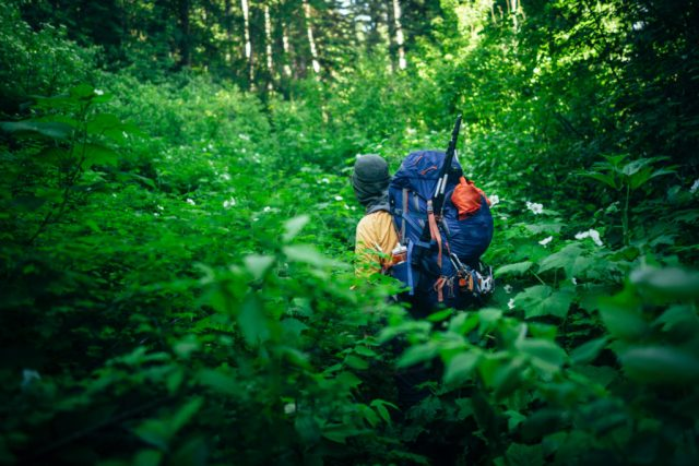 Lush Temperate Rainforest