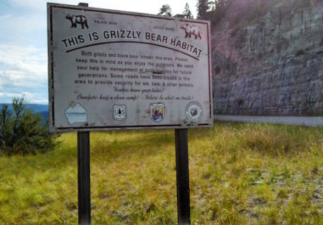 Grizzly Bear Habitat Sign