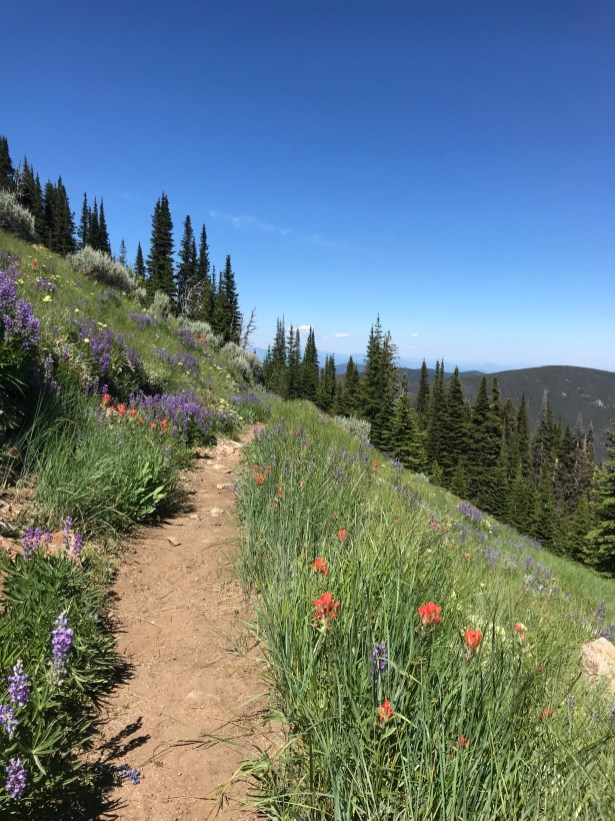 Indian paintbrush, lupine and other wildflowers on the Kettle Range. Photo by Jeff Johnson, Community Outreach Coordinator at the Lands Council.