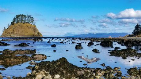 Cape Alava by Brian Ambrose