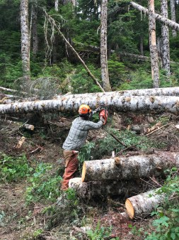 Thomas uses a chainsaw to clear fallen trees from the Elbow Lake Trail