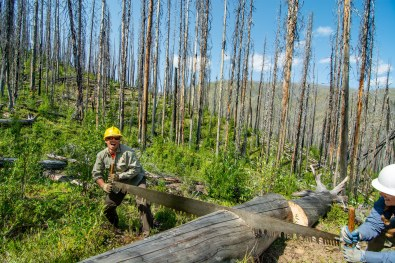 Volunteer and 2015 PNT thru-hiker, Michael Sawiel returned to help our Eastern Pasayten Trail Crew log out the Boundary Trail. Photo by Sean Miller.