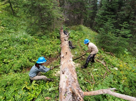 Crew members practice teamwork while double-bucking a fallen log. Together, they cleared 37 logs from the PNT in the Pasayten Wilderness on their last hitch. Photo by Thomas Gingrich.